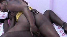 Sexy black bitches lick each other's wet black cunts at night